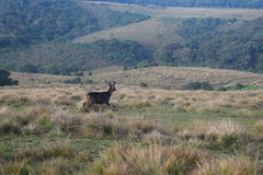 Centrale heriage van de hooglandwereld zit van Sri Lanka Royalty-vrije Stock Foto's