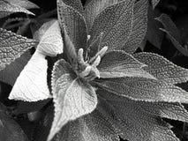 Centrale noire et blanche de fleur Image libre de droits