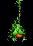Centrale s'élevante verte avec peu de fleur rouge Photographie stock libre de droits