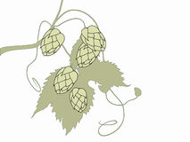 Centrale stylisée d'houblon illustration stock