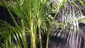 Centrale tropicale Images libres de droits