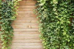 Centrale verte de plante grimpante Photo stock