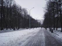 Centrale weg in het park november Begin van de winter Royalty-vrije Stock Foto's