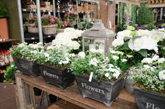 Centrales à la jardinerie Photos stock