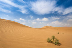 Centrales d'arbuste dans le désert Images libres de droits