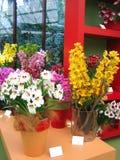 Centrales d'orchidée Photos stock