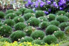 Centrales dans le jardin botanique Photographie stock libre de droits