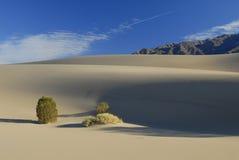 Centrales de désert sur des dunes de sable Photo stock