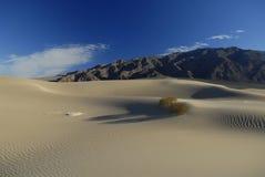Centrales de désert sur des dunes de sable Images libres de droits