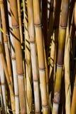 Centrales en bambou Photographie stock libre de droits