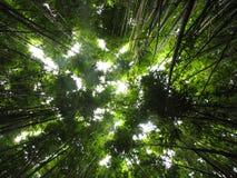 Centrales en bambou de jungle photo libre de droits