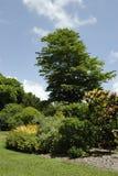 Centrales et arbres Photographie stock