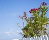 Centrales fleurissantes. Images libres de droits