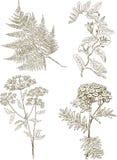 Centrales herbacées illustration libre de droits