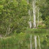 Centrales par le bord de l'eau. Image libre de droits