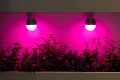 Centrales thermiques par des lampes Images stock