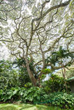 Centrales tropicales   photos stock