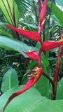 Centrales tropicales Photos libres de droits