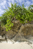 Centrales tropicales Images libres de droits