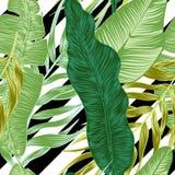 Centrales tropicales illustration de vecteur