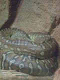 Centralian python στοκ φωτογραφία με δικαίωμα ελεύθερης χρήσης