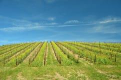 Centralt Kalifornien vinland arkivbild