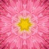 Centre concentrique rose de fleur. Conception de Mandala Kaleidoscopic images libres de droits