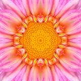 Centre concentrique rose Mandala Kaleidoscope de fleur image libre de droits