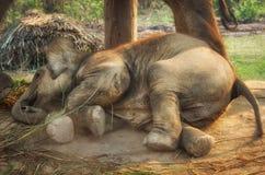 Centre d'élevage d'éléphant dans Chitwan, Népal Photo stock