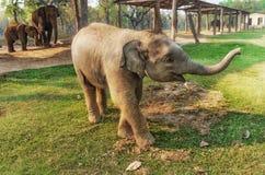 Centre d'élevage d'éléphant dans Chitwan, Népal Photos libres de droits