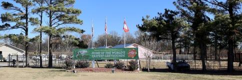 Centre d'adaptation de lévrier, Memphis occidental, Arkansas photos stock
