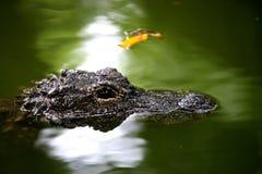 Centre de crocodile de Chongqing de l'alligator Photo stock