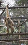 Centre de délivrance pour des primats photo stock