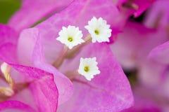 Centre de fond de fleur Images stock