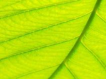 Centre de macro vert de texture de feuille et trouble choisis de la texture de feuilles Utile comme fond images stock