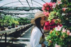 Centre de serre chaude de bonsaïs rangées avec de petits arbres Photo stock