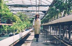Centre de serre chaude de bonsaïs rangées avec de petits arbres Image stock