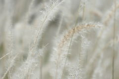 Centre mou d'herbe Image libre de droits