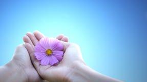Centre mou de cosmos rose chez la prise de la femme par la main de l'homme dans l'amour sur b Image libre de droits