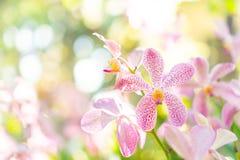 Centre sélectif de belles fleurs colorées avec le fond de bokeh d'été Style de couleur de vintage photographie stock libre de droits