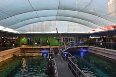 Centre view of Dugong Island at Sea Life Sydney Aquarium where there are two dugongs namely Pig and Wuru Stock Image
