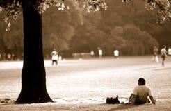 centrel城市新的公园约克 免版税库存照片