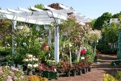 centrera den trädgårds- pergolaen Royaltyfria Bilder