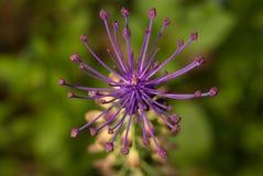 Centrerad blomma royaltyfria bilder