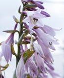 Centres serveurs de fleurs dans le jardin, plan rapproché Photo libre de droits