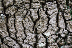Centric tree bark Royalty Free Stock Images