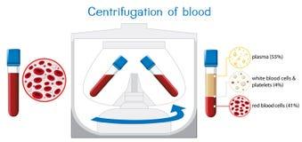 Centrifugação do diagrama do sangue ilustração royalty free