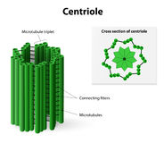 Centriole Stock Images