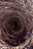 Centripetalt träd arkivbilder