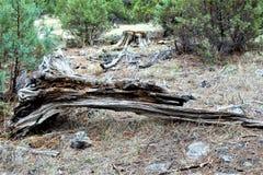 Centro bianco della natura della montagna, Pinetop Lakeside, Arizona, Stati Uniti immagine stock